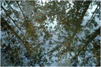 0121   Forest Reflections